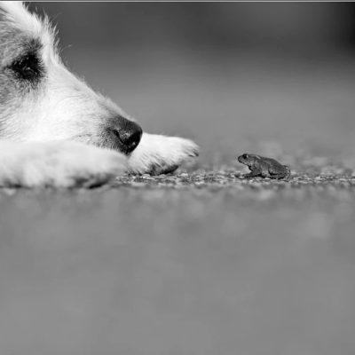 собака съела лягушку