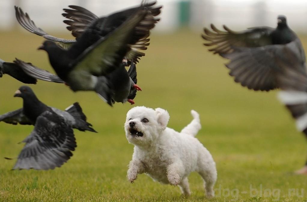 охотничье поведение у собак