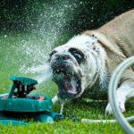 Собака на даче — 9 правил безопасности
