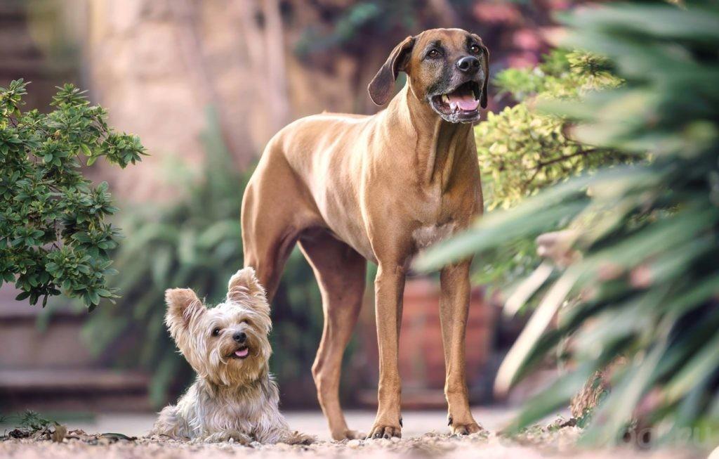 вашу собаку боятся люди