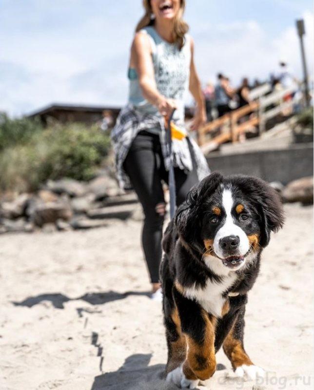 обязанности собаки
