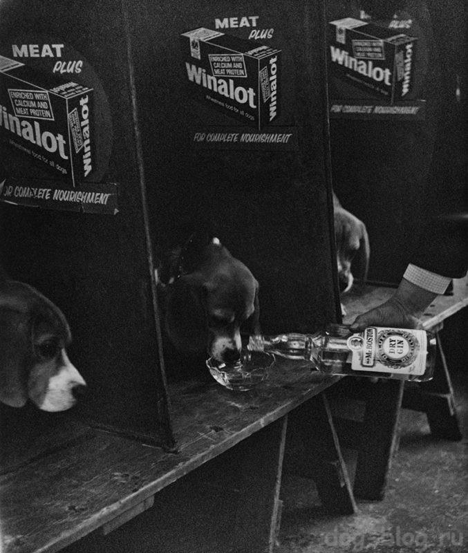 Бейкер фото с выставки собак