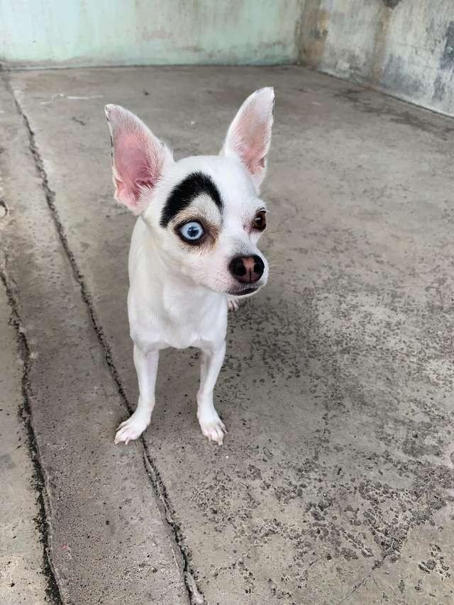 собака с бровью