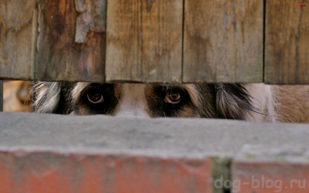 собака из приюта бесплатно