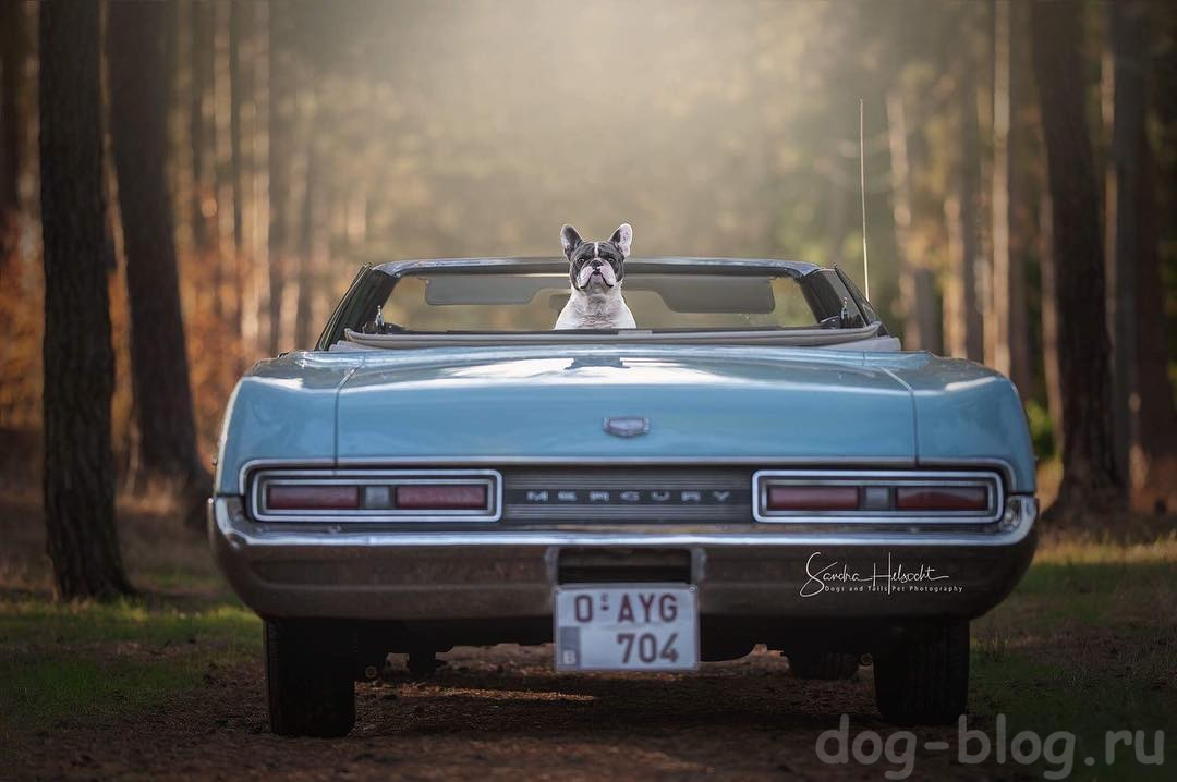 Dogs and their Rides Project