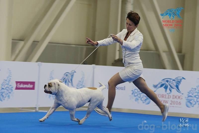 учимся проигрывать на выставках собак