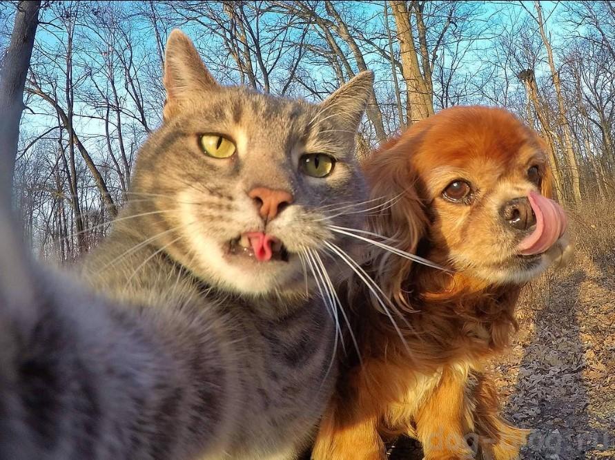 кот селфи с собаками