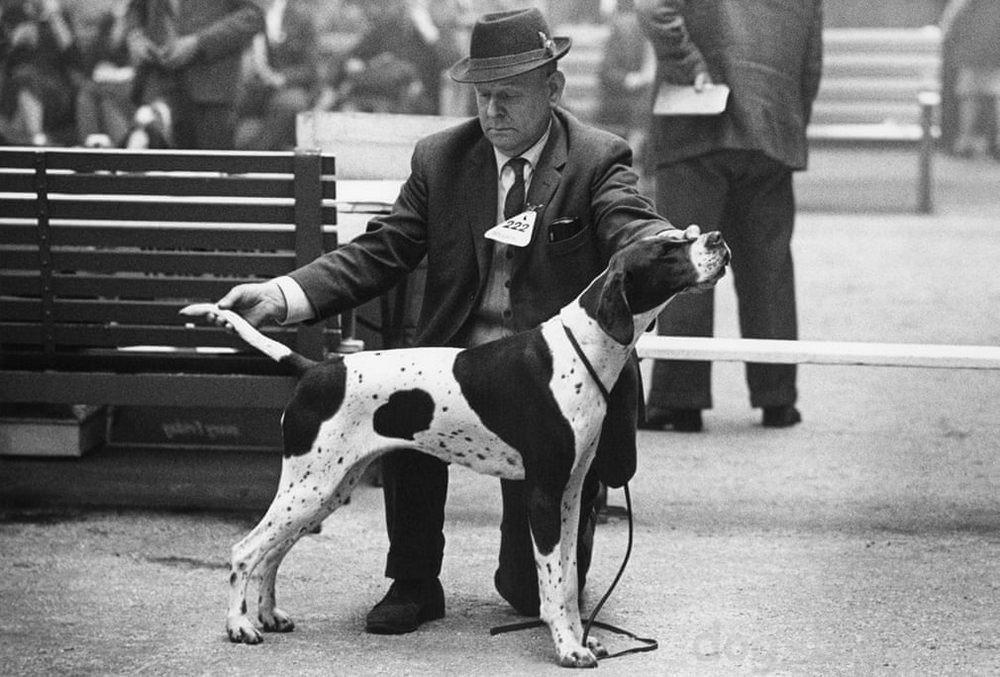 Бейкер фото собак