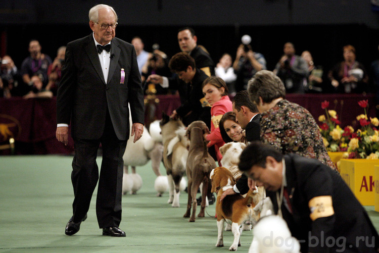 как научиться проигрывать на выставках собак