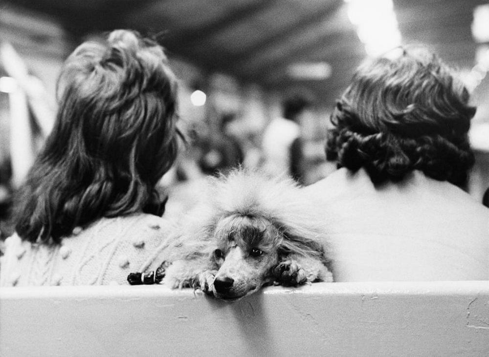 фото Бейкер с выставки собак