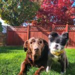 Слепые собаки видят мир сердцем