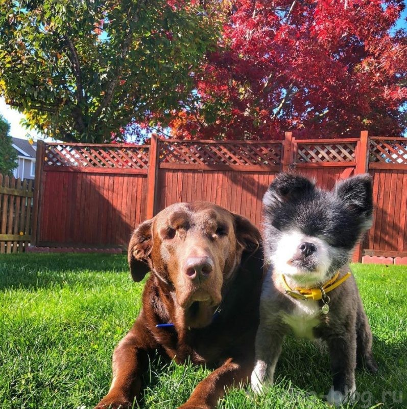 слепая собака фото