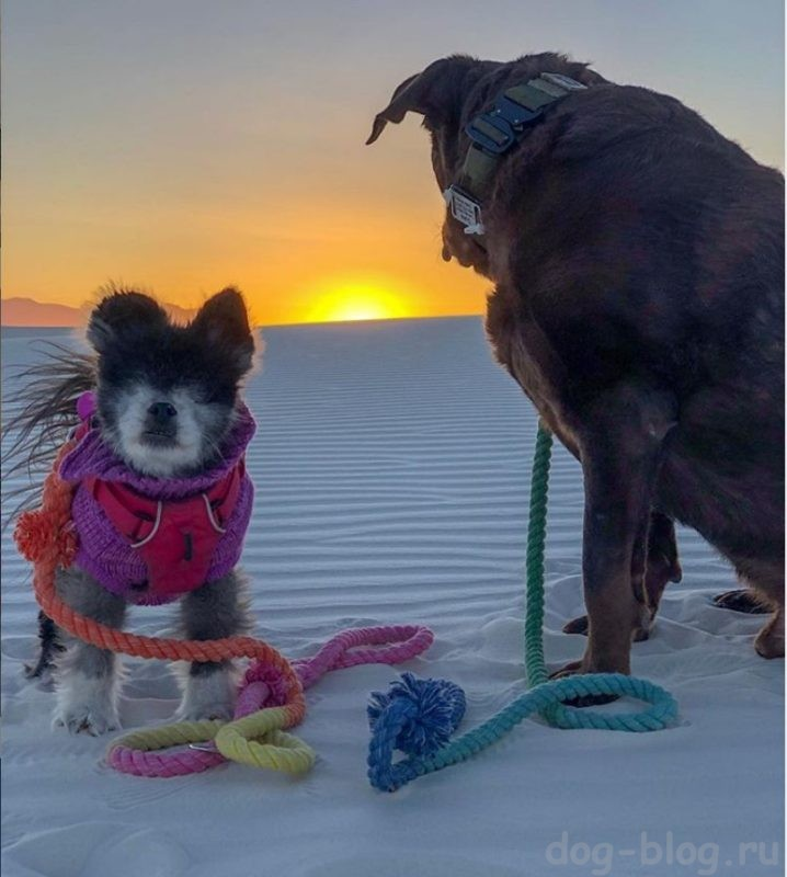 как живут слепые собаки