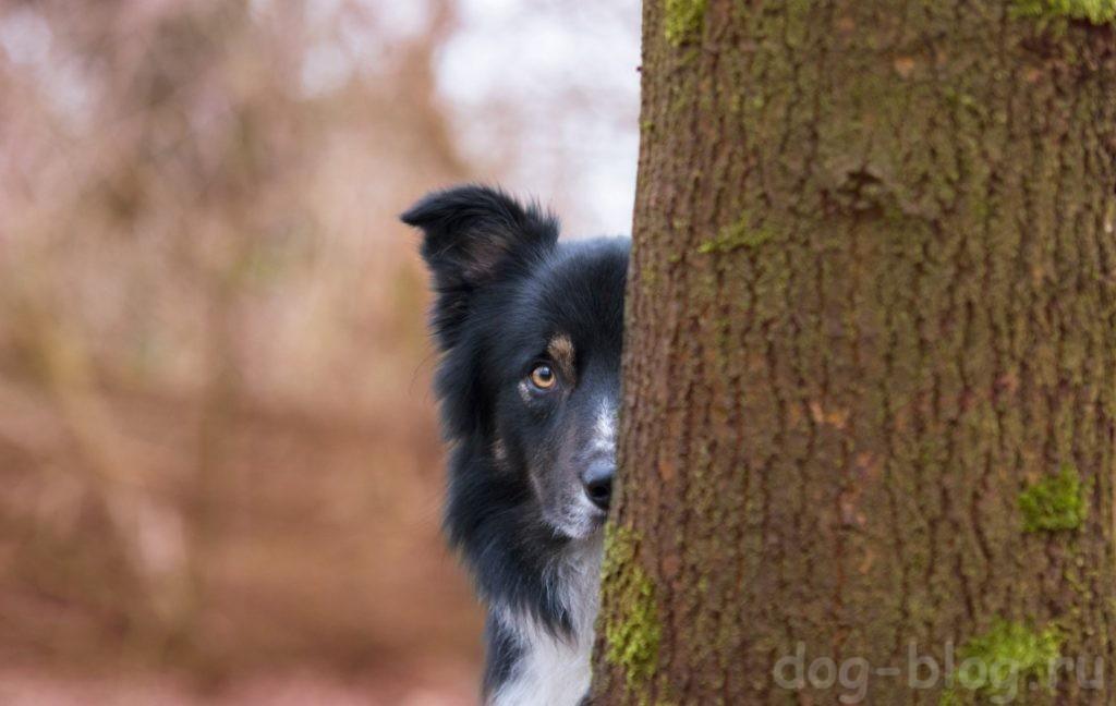 нет контакта хозяина с собакой