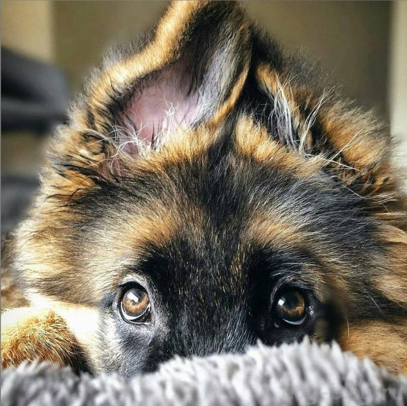 как приучать щенка к дому
