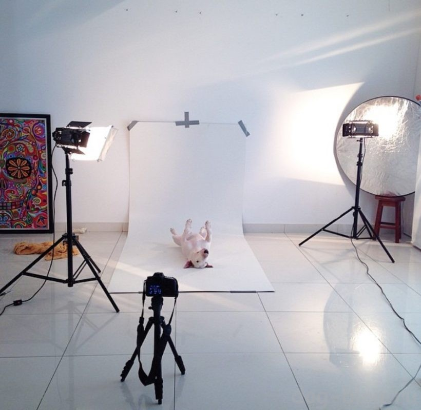 фото в студии буля Джимми