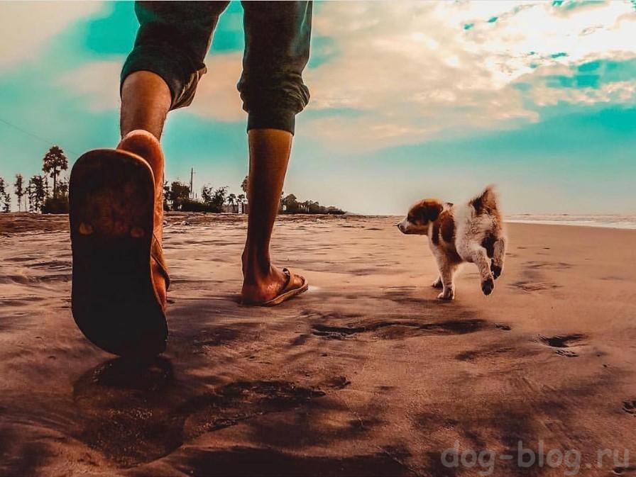 как не срывать зло на собаку