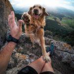 7 советов, как не срывать зло на собаке