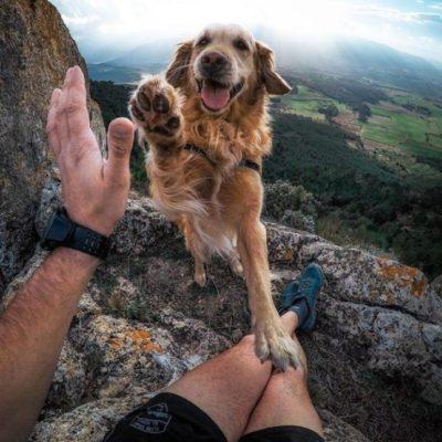 как не срывать зло на собак