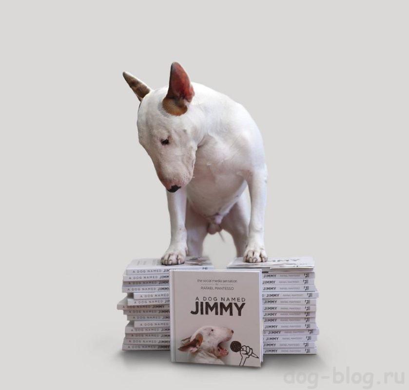 книга про бультерьера Джимми
