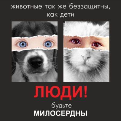 людям, отдающим собак, когда рождается ребёнок, посвящается
