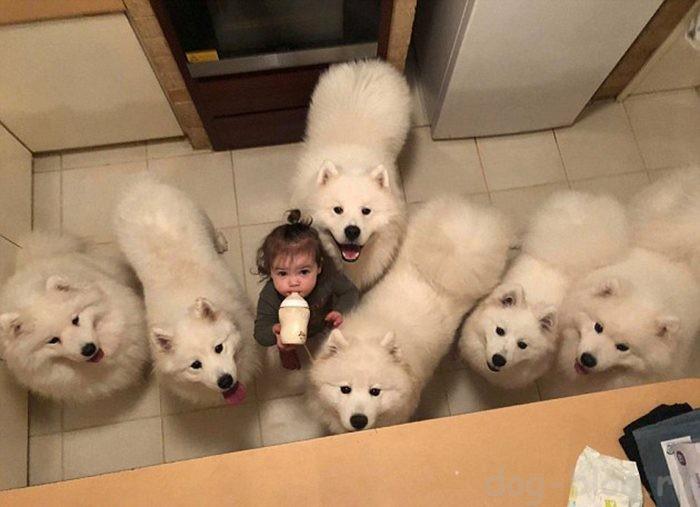 фото ребёнка с самоедами