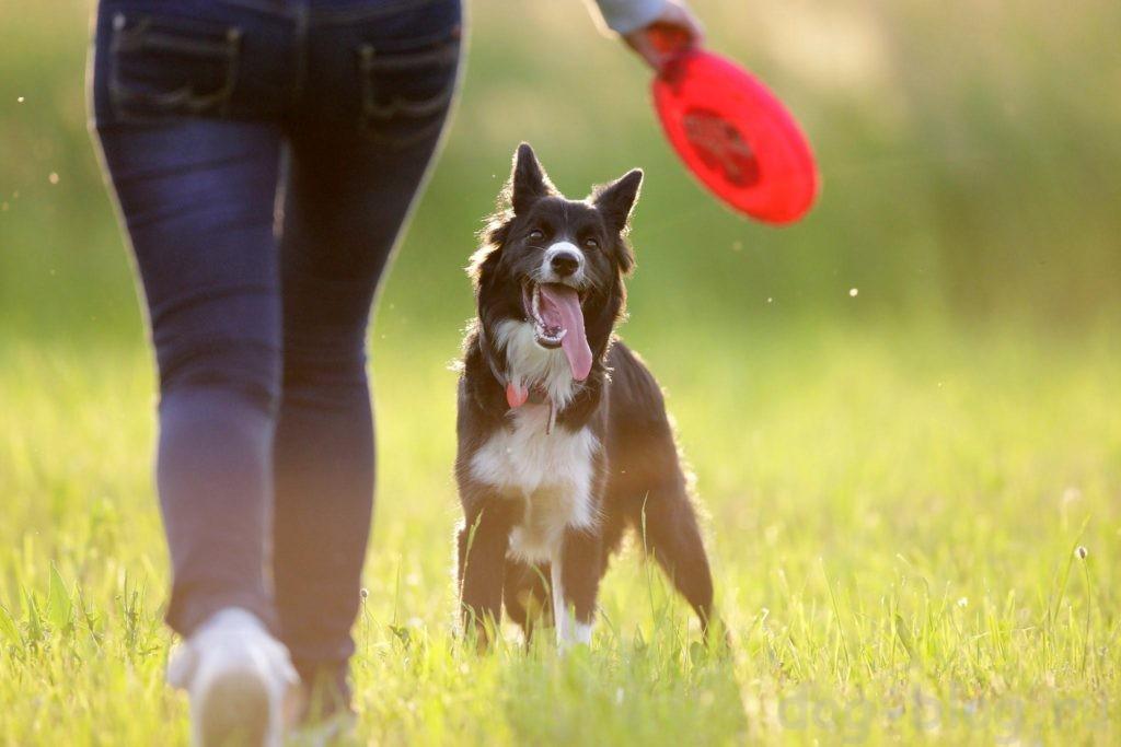 почему собака убегает