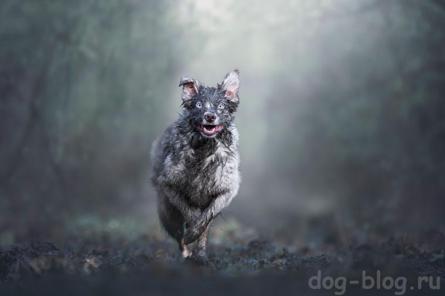 красивые собаки фото