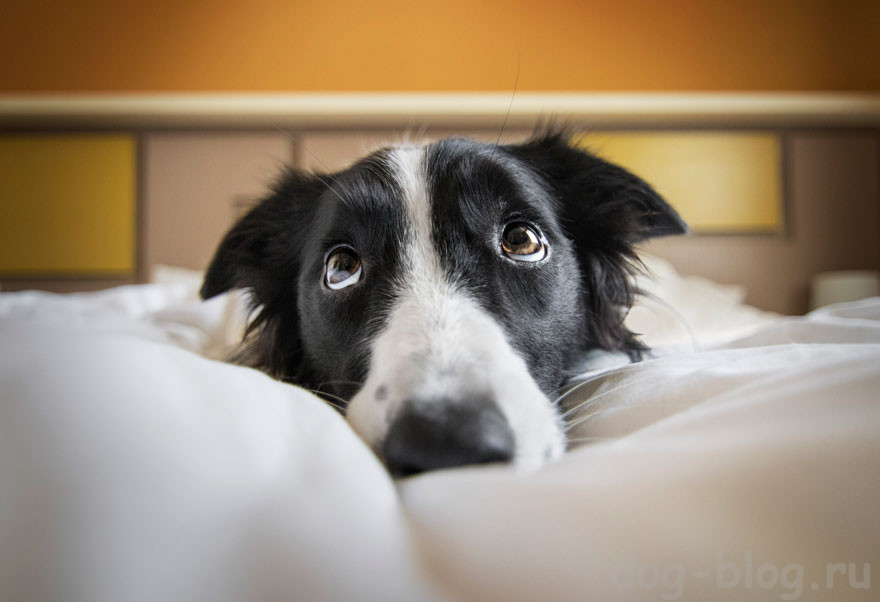 красивые собаки мира фото