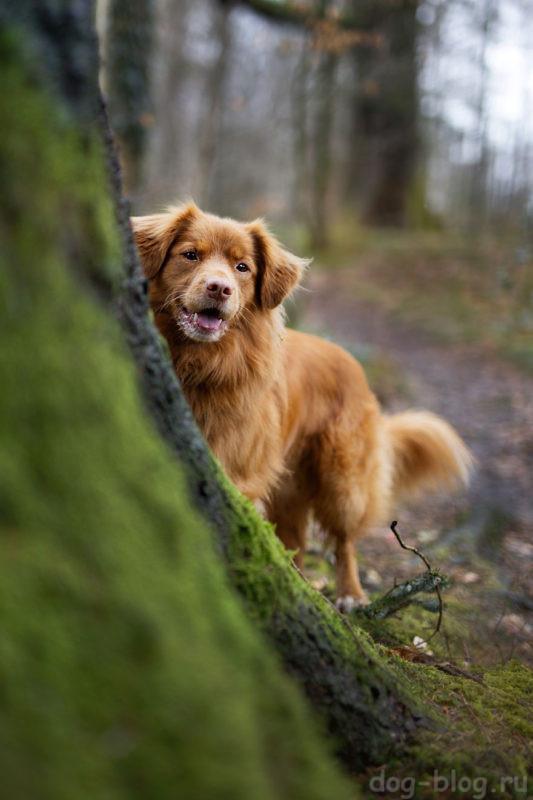 смотреть фото собак