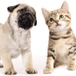 Человек-кот и человек-собака