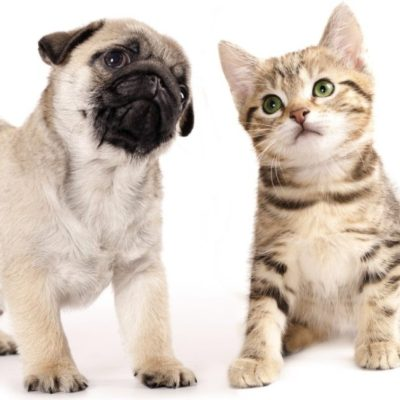 человек собака кошка