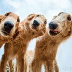 30 фотографий собак — победителей международного конкурса 2019 г