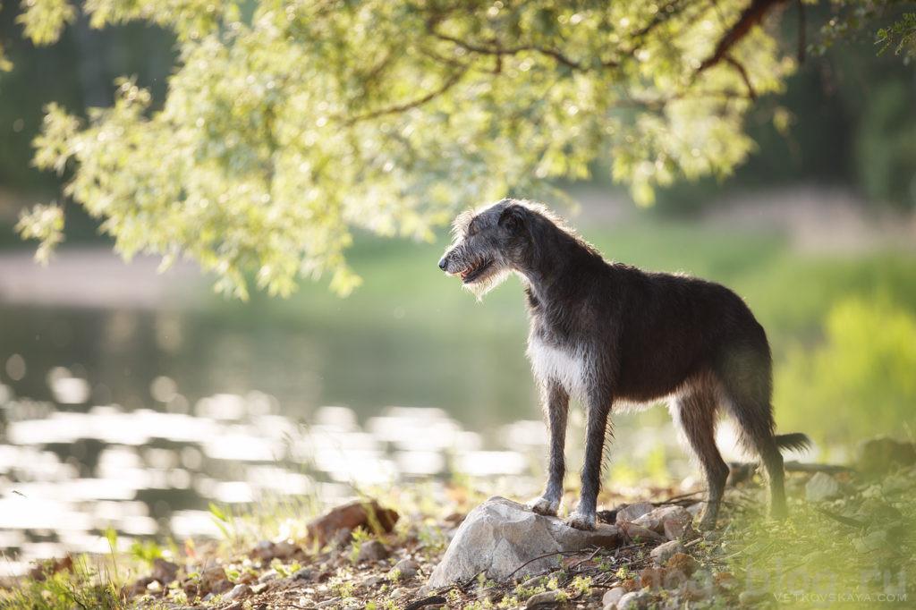 10 уроков от вашей собаки