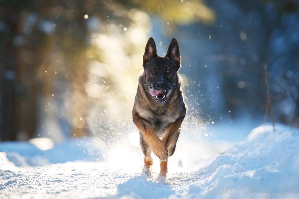 10 жизненных уроков от вашей собаки