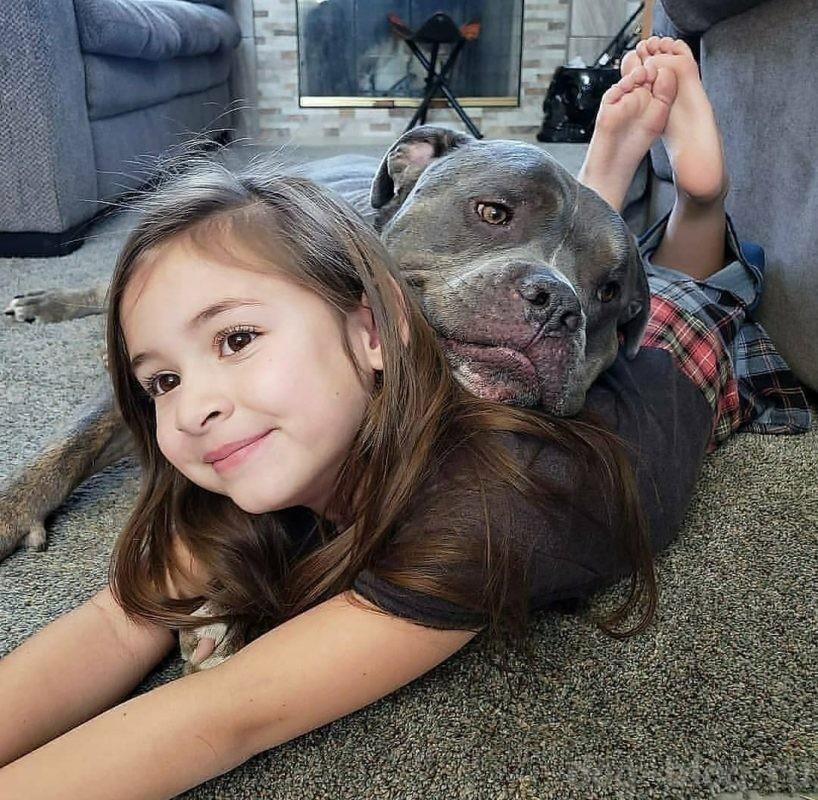 собака проявляет агрессию к ребёнку