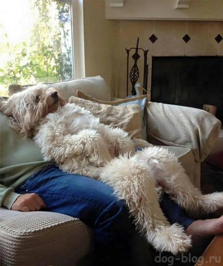 роль собаки в жизни человека