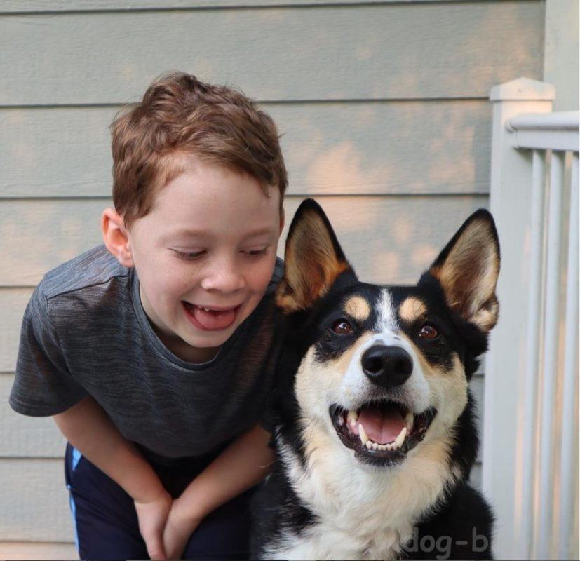 собака агрессивная к ребёнку