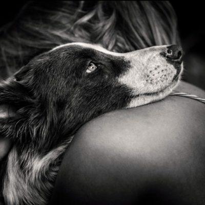 завещание собаки