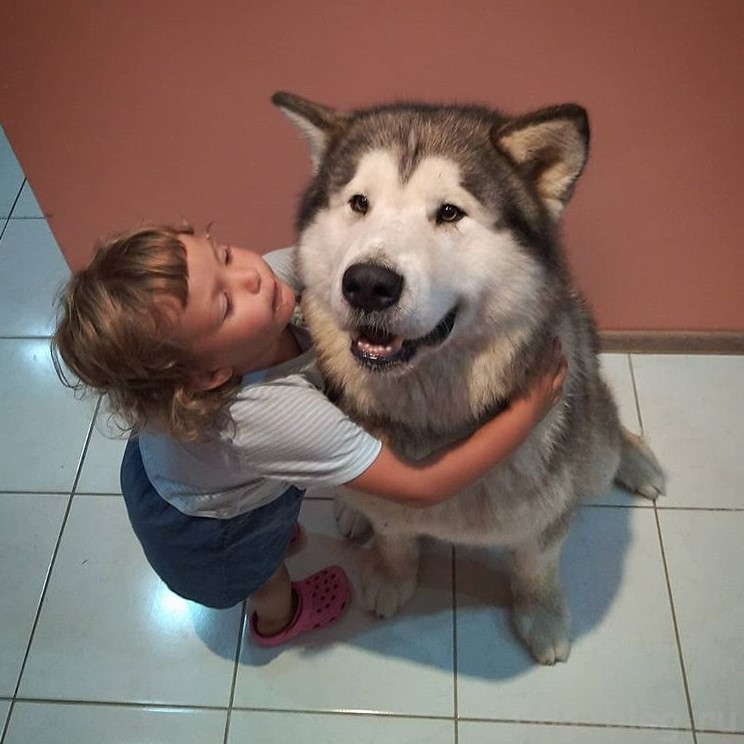 агрессия собак к детям
