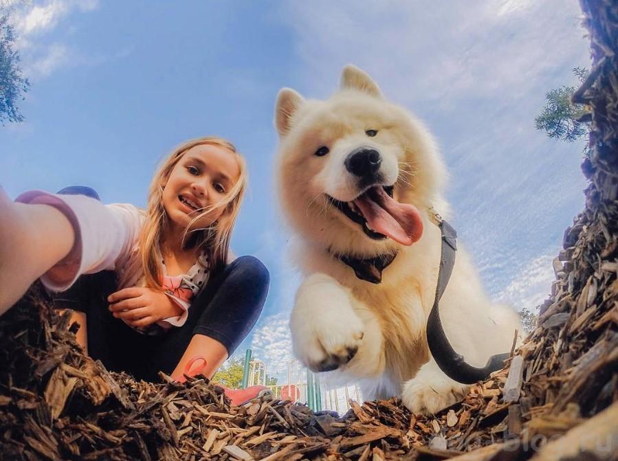 жизнь людей с собаками