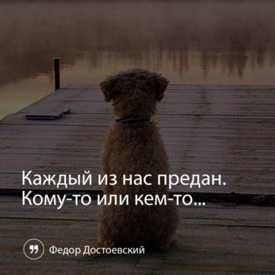 отдам собаку