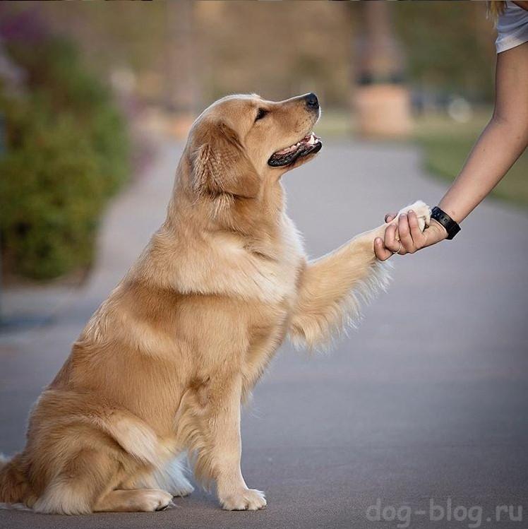 письмо собаки своему хозяину