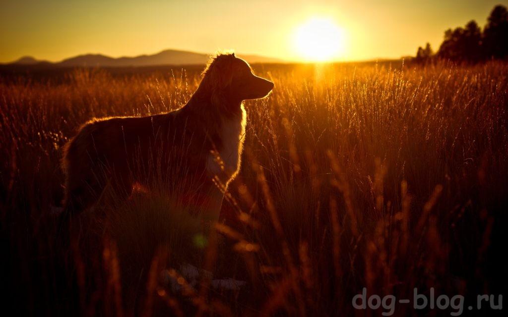 собака осенью
