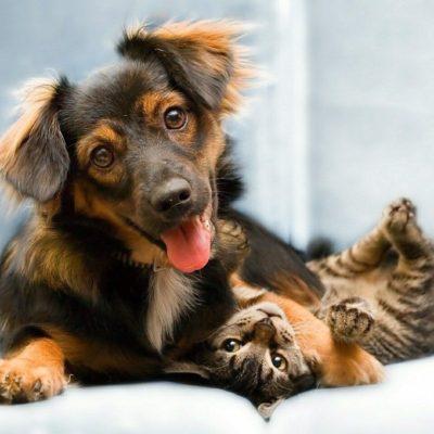 кошка и собака в доме