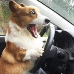 С Днём водителя!