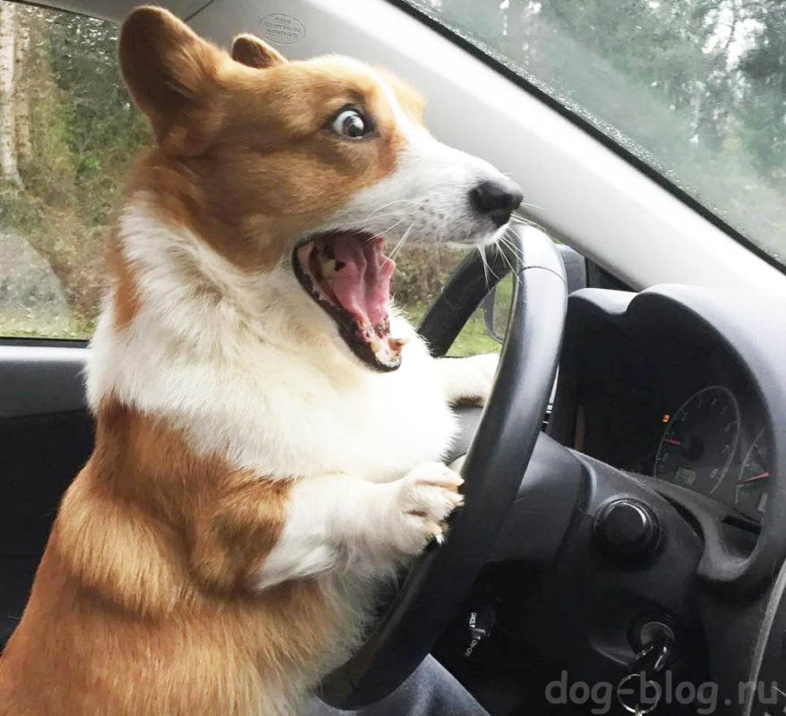 С Днём водителя