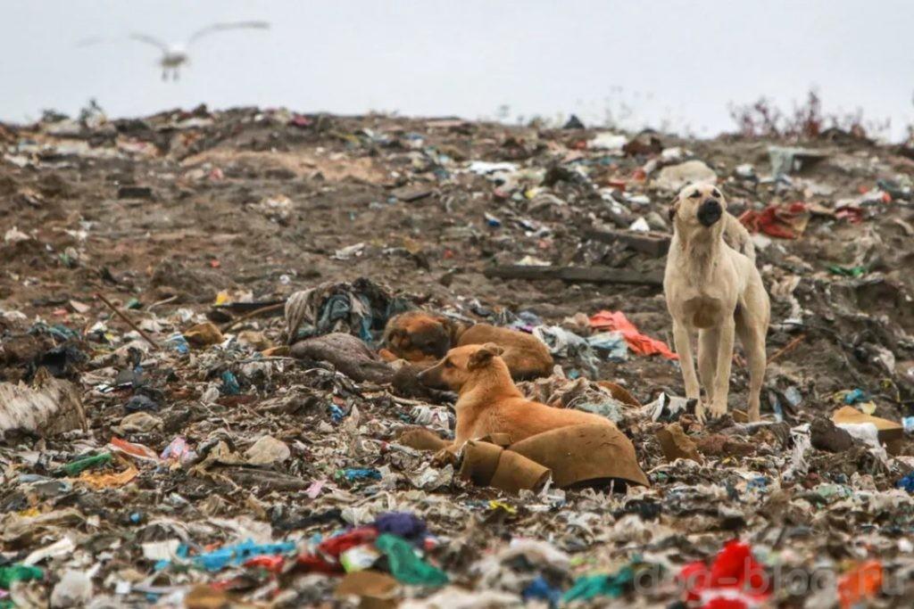 закон Об ответственном обращении с животными