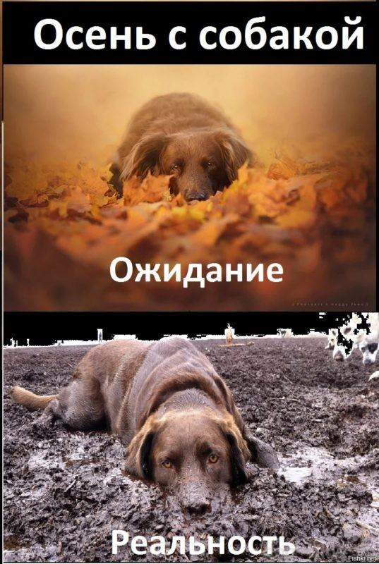 собака в доме - ожидание и реальность