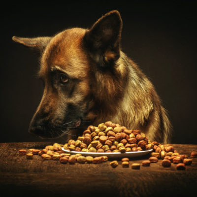 собака не ест сухой корм